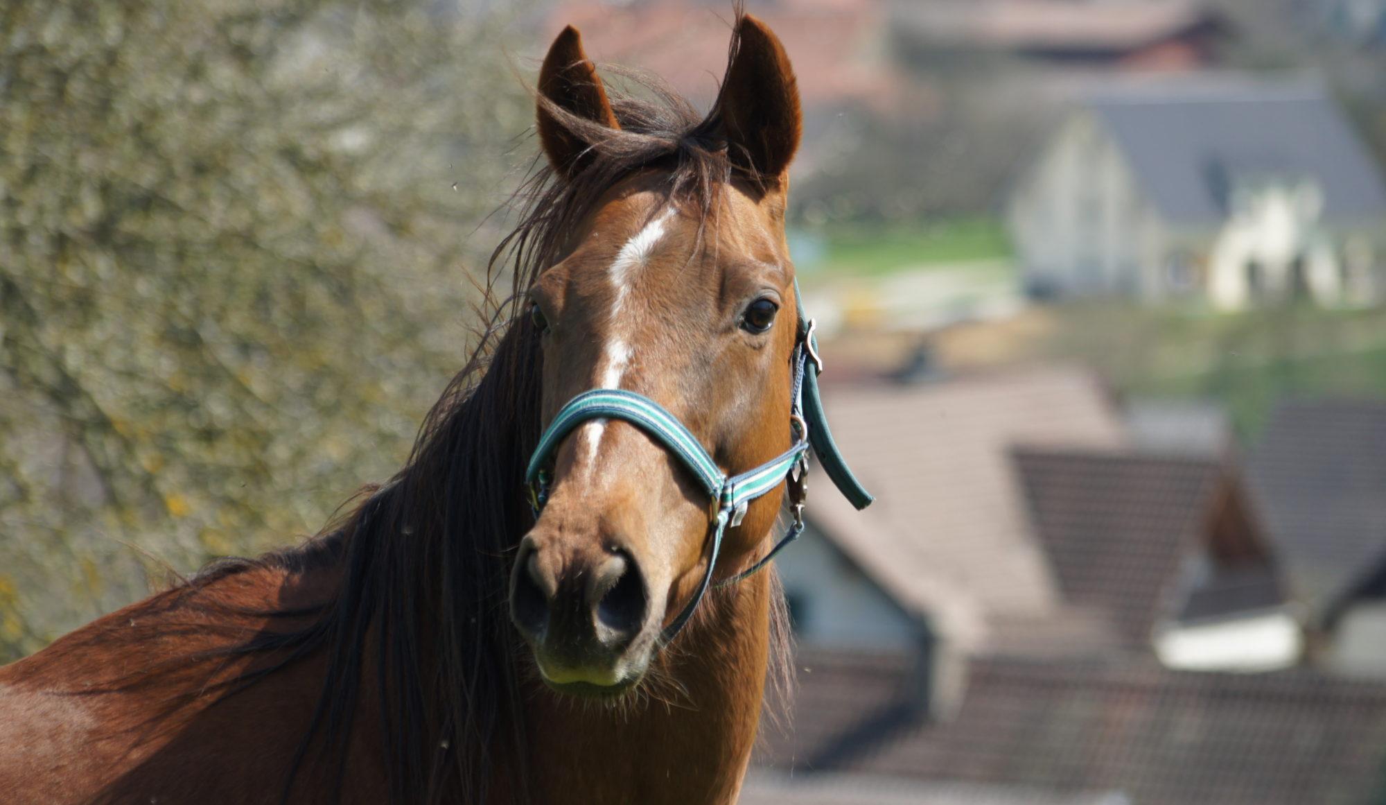 Horsetherapie